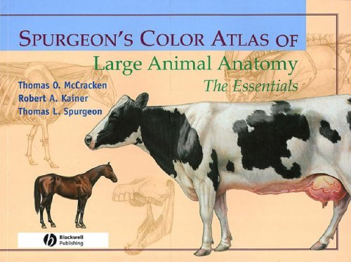 9780683306736 Spurgeon's Color Atlas Of ... Anatomy: The Essentials